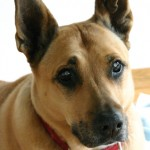 Maia 2007, First Dog, Best Dog